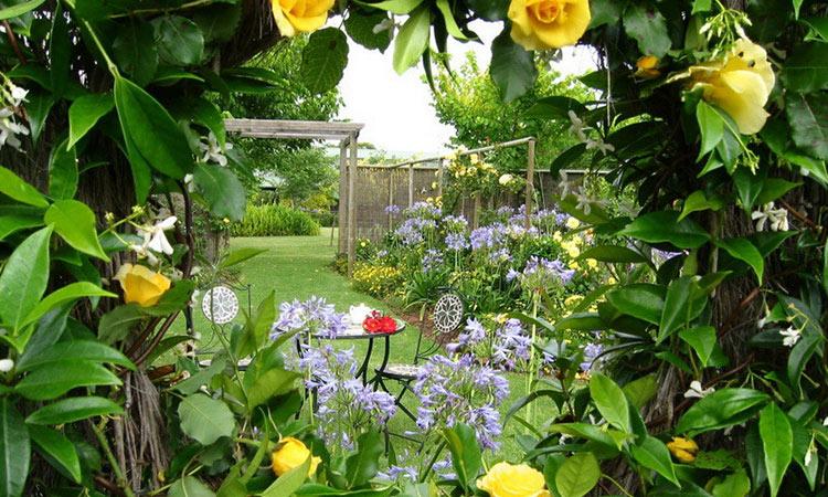 Window to Secret Garden